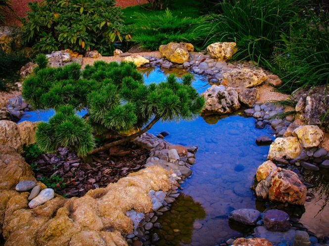 Pomys na oczko wodne w ogrodzie kamienie ro liny a for Karpfen gartenteich