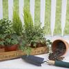 Bezpieczne podlewanie kwiatów. Jak uchronić rośliny przed przelaniem?