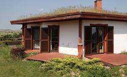 Rośliny na zielone dachy