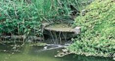 Glony w oczku wodnym - zwalczanie