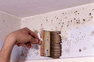 Odgrzybianie ścian przed malowaniem
